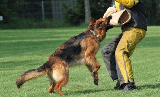 Trường huấn luyện chó quận 3 tận tâm, uy tín, giá rẻ