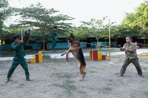 Những giống chó nghiệp vụ được chọn mua nhiều nhất